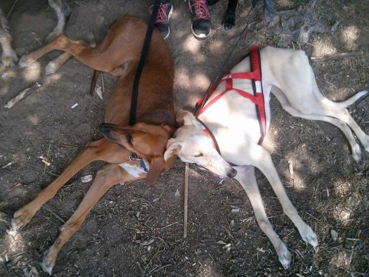perros_tumbados_nerea